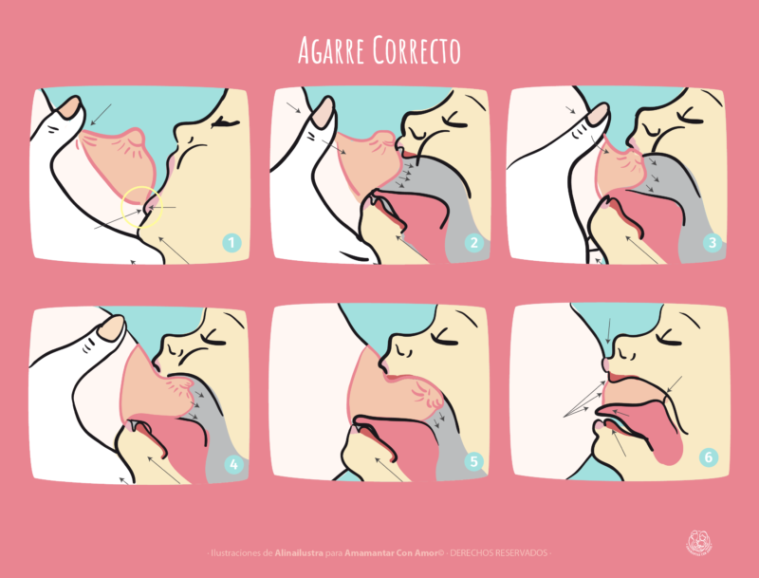 ACA_Ilustraciones_lactancia-15-e1512476091660